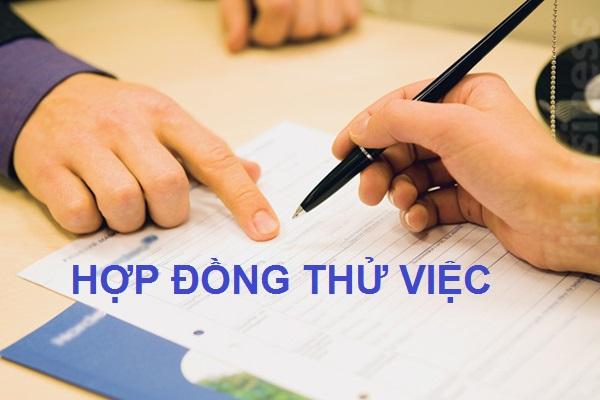 hop dong thu viec 2021